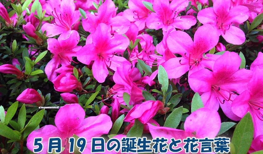 5 月 19 日 誕生 花
